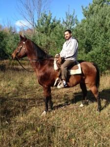 Habibi horse